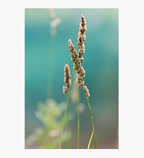 wildflower in the meadow Photographic Print