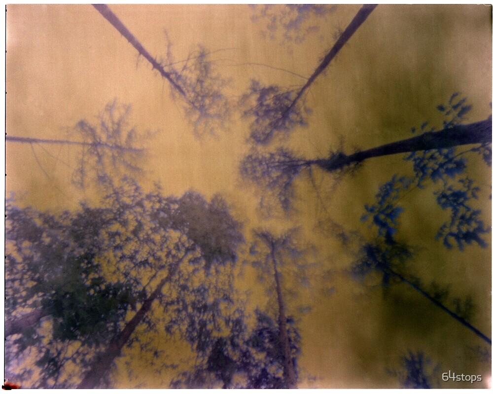 pinhole trees ans sky by 64stops