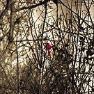 Cardinal in Hiding by David Owens