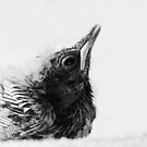 Portrait of a Baby Thrush by Robyn Carter