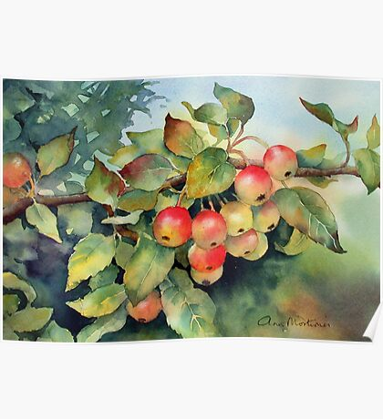 Green crab apples Poster