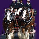 CUB Clydesdales in Warragul, Gippsland by Bev Pascoe