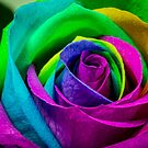 Multi Coloured Rose by Keith G. Hawley