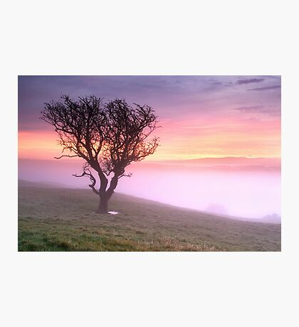 Misty Sunrise, near Kendal, Cumbria Photographic Print