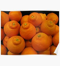 Minneola Oranges Poster