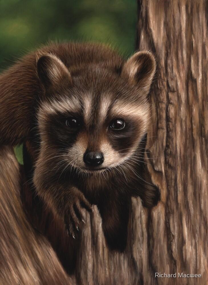 Raccoon portrait by Richard Macwee