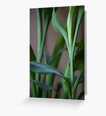 dusty bamboo bokeh Greeting Card