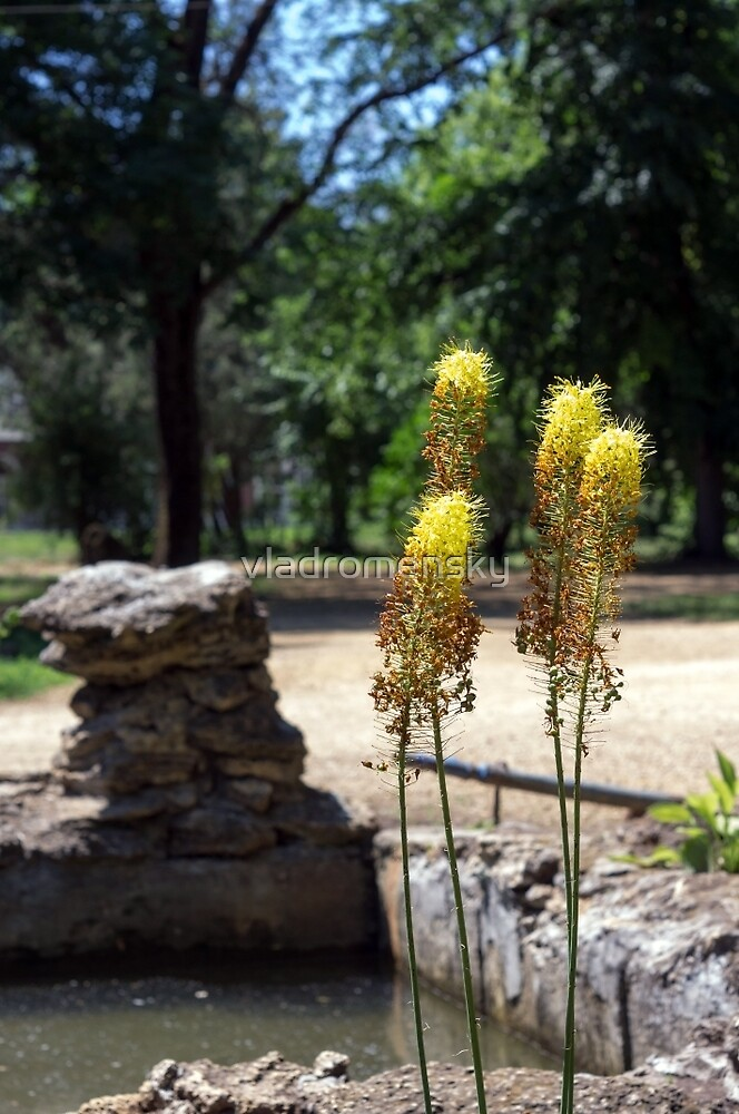 Selective focus on the yellow plants in the foreground by vladromensky
