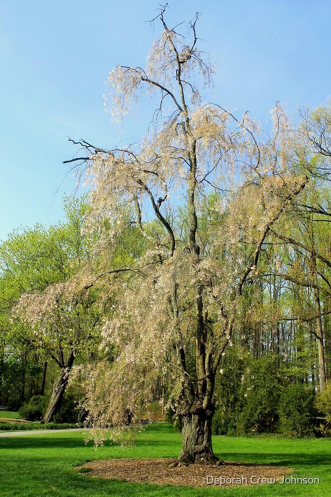 Spring Bloom by Deborah Crew-Johnson