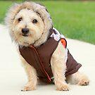 life as a doggy Eskimo by sarahb03