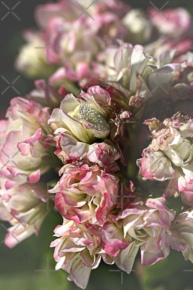 Softly Nature by Joy Watson