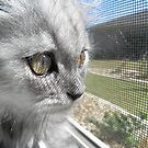 Leo the Wonder Cat by April-in-Texas