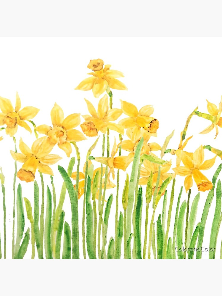 yellow daffodils field watercolor by ColorandColor