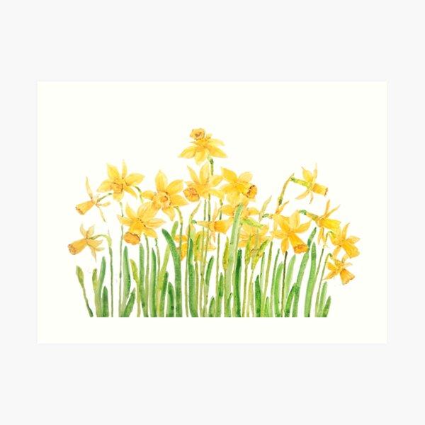 yellow daffodils field watercolor Art Print