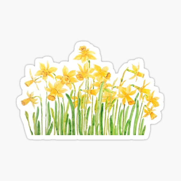 yellow daffodils field watercolor Sticker