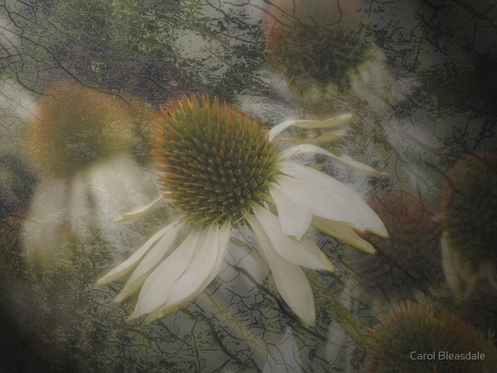 Opaque by Carol Bleasdale