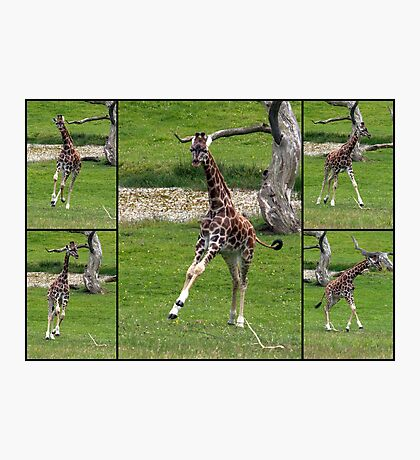 Frolicking Photographic Print
