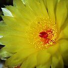 flower 14   ♪ Cactus Flower♫ by Liza Barlow