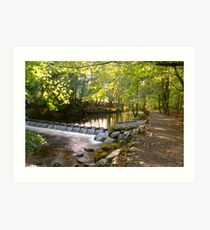 Tollymore Forest Park, Mournes Art Print