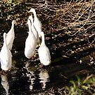 Six Little puddle ducks... by technochick