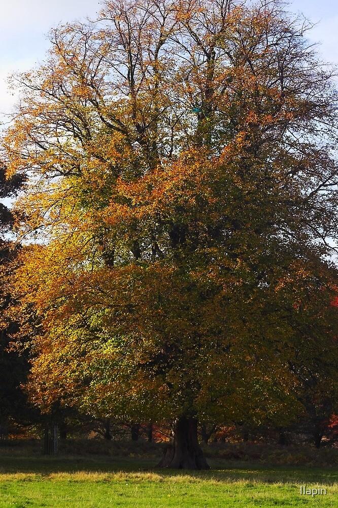 autumn glory by Ilapin