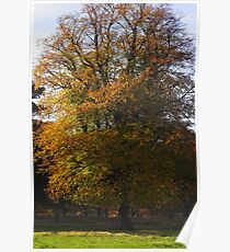 autumn glory Poster
