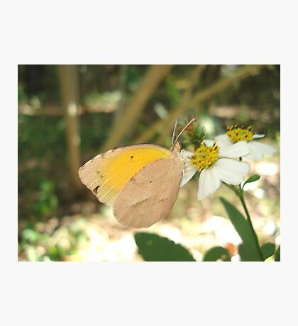 SLEEPY ORANGE ON BIDENS ALBA Photographic Print
