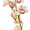 Orchids ~ Peace Love & Tranquility