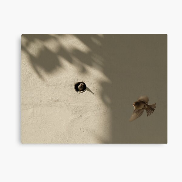 Sparrows living in the wall of Bab-ı Ali (Sublime Porte) Canvas Print