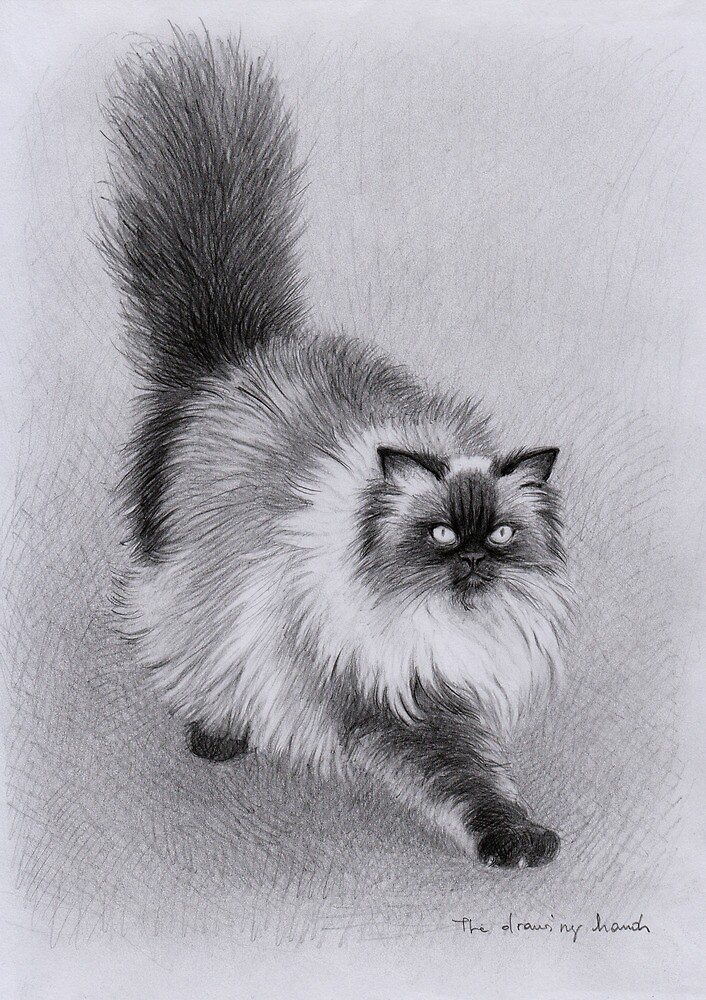 Alfie the Cat by thedrawinghands