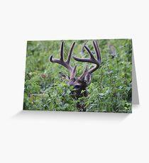 Velvet Buck Greeting Card