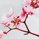 Why I love Spring No:1.... by Mary Grekos