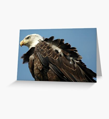 Alaskan Bald Eagle Greeting Card