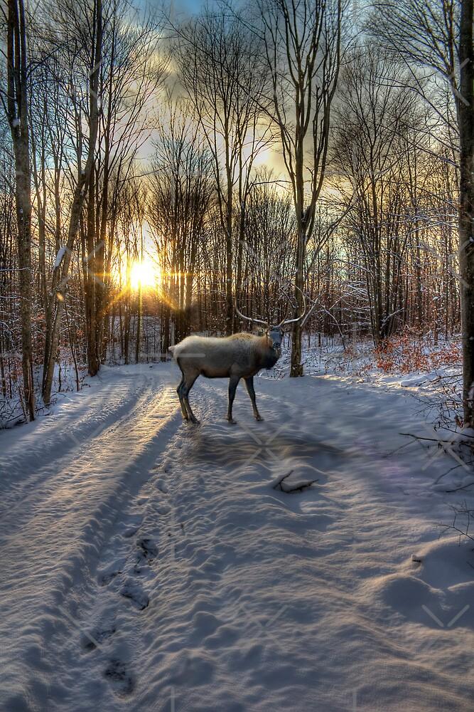Winter Elk by Megan Noble