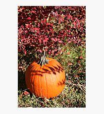 Season of Harvest 1 Photographic Print