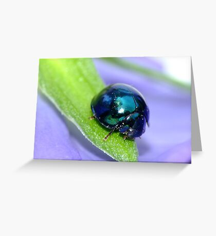 Steel Blue Ladybird Greeting Card