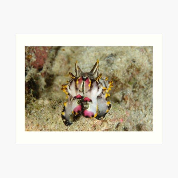 Flamboyant cuttlefish - Metasepia pfefferi Art Print