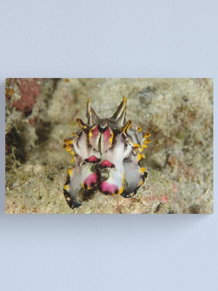 Alternate view of Flamboyant cuttlefish - Metasepia pfefferi Canvas Print