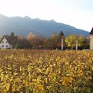 Sunlit Field in Vaduz, Liechtenstein by SkiCC