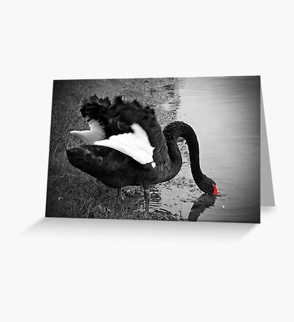 Black Swan, Perth, Western Australia Greeting Card