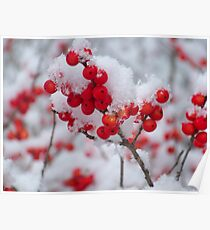 SNOW ON BERRIES Poster