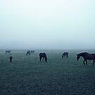 Horses in fog by Andrea Gerak