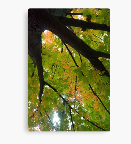 One From the Trunk Canvas Print