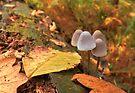 Woodland Autumn by Ray Clarke