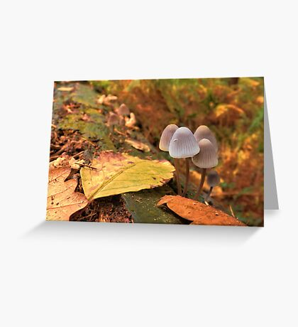Woodland Autumn Greeting Card