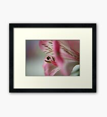 Within reach..... Framed Print