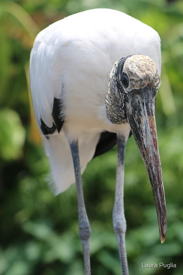 Wood Stork by Laura Puglia