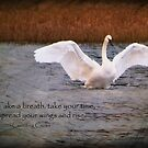 Spread Your Wings and Rise by Tracy Riddell