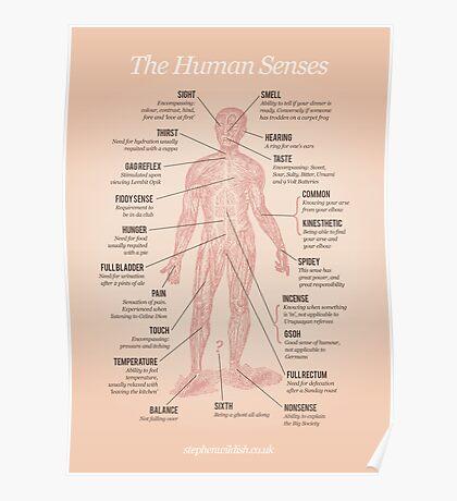 The Human Senses Poster