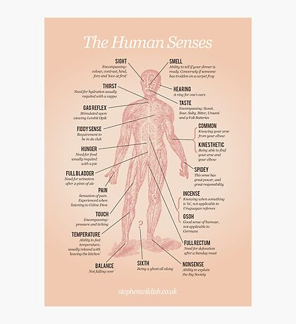 The Human Senses Photographic Print